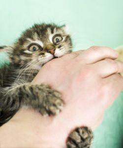 отучить кошку кусаться