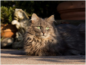 Как лечить панкреатит у кошки