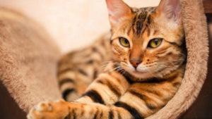 Симптомы и лечение панкреатита у кошек