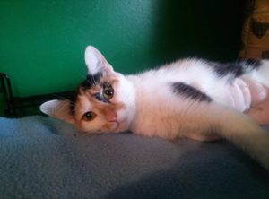 лечение вирусной лейкемии у кошек