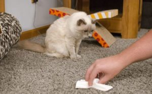 Как и чем можно вывести запах кошачьей мочи с ковра