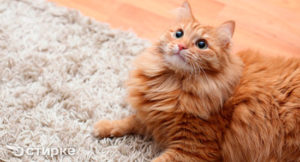 чем можно вывести запах кошачьей мочи с ковра