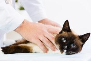 лечение хронической почечной недостаточности у кошек