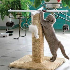 приучить взрослого кота к когтеточке