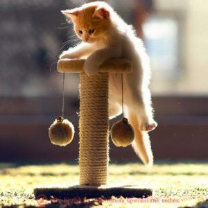 Как можно приучить взрослого кота к когтеточке